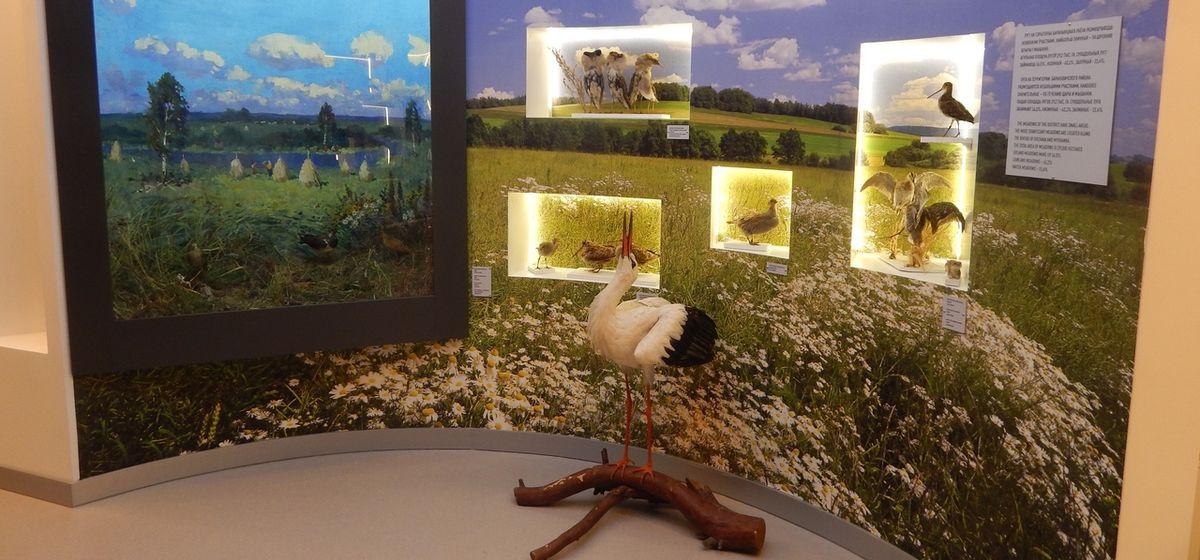 Новая выставка о природе открылась в Барановичах. Что показывают?