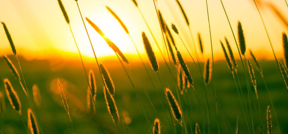 Будет тепло и без дождей? Прогноз погоды на 15-17 июня в Барановичах