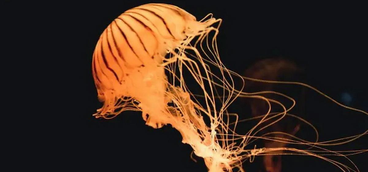 Интересные факты. Какая медуза является для человека самой опасной