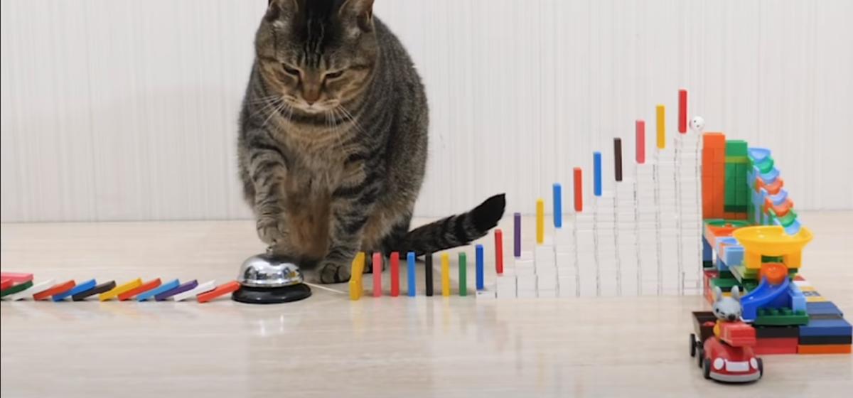 Видео, где хозяин кормит котов с помощью домино, посмотрели почти 46 миллионов раз. Посмотрите его и вы