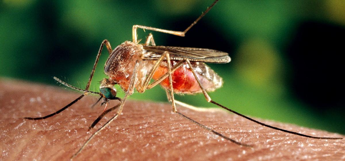 Как защититься от укусов комаров? Эффективные способы