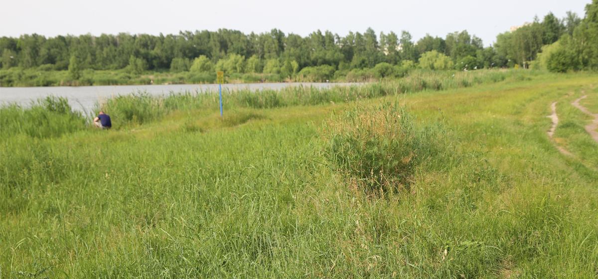 Трава по пояс, мусор и клещи. Что происходит на территории около Жлобинского озера в Барановичах