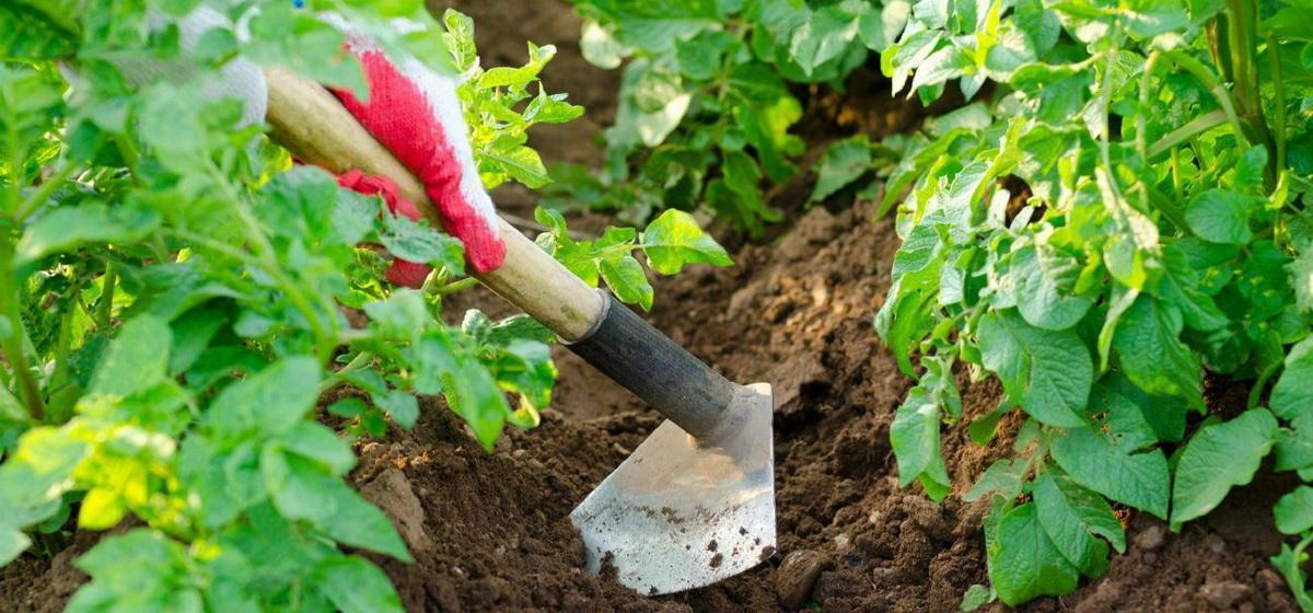 Календарь садово-огородных работ от Петра Ломоноса: 23-29 июня