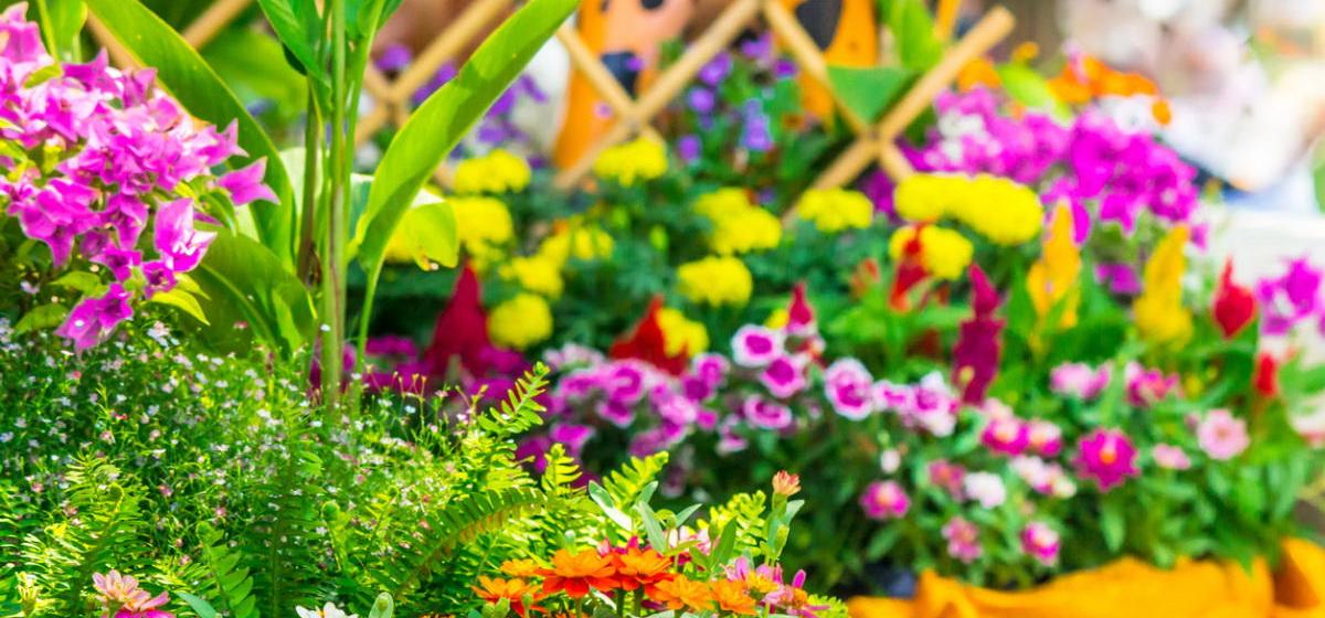 Цветник в июне. ТОП-10 самых важных дел