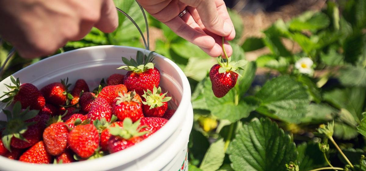 Календарь садово-огородных работ от Петра Ломоноса: 9-15 июня