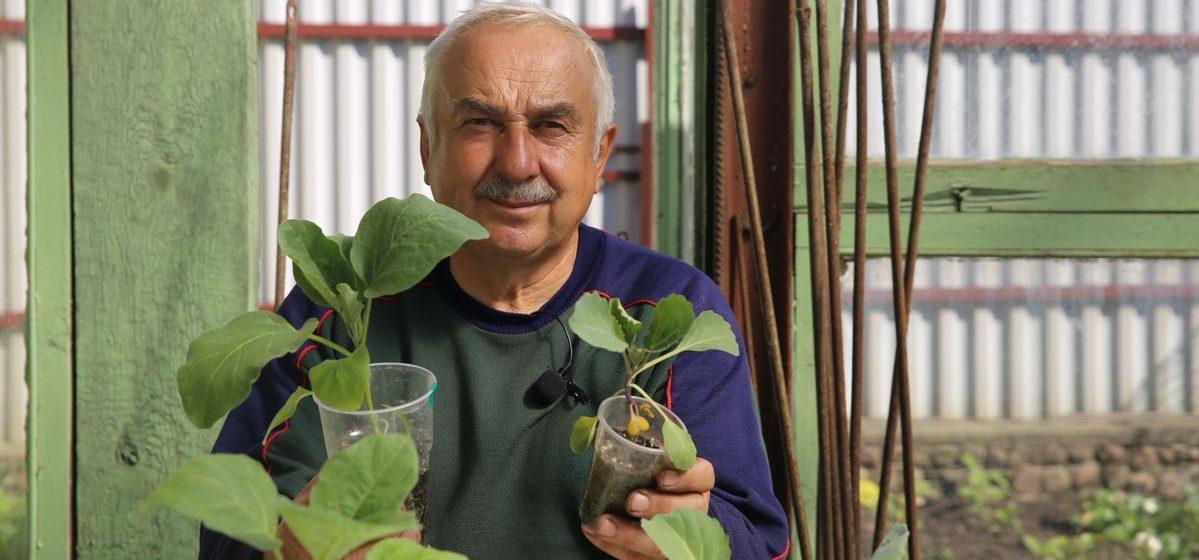 Как отпугнуть вредителей от грядок и уберечь корневую систему овощных культур от болезней