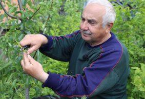 Что такое окулировка и как ее правильно выполнить: мастер-класс от опытного садовода