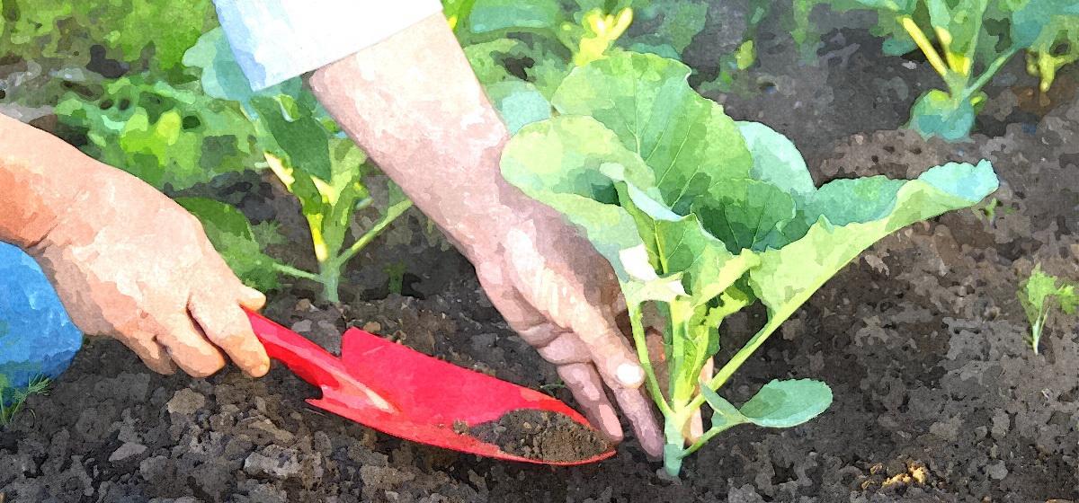 ТОП-10 самых важных дел в огороде в июне