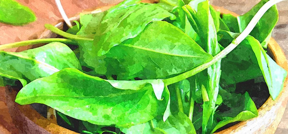 Какими целебными свойствами обладает щавель и кому противопоказано употребление этой травы, рассказала диетолог