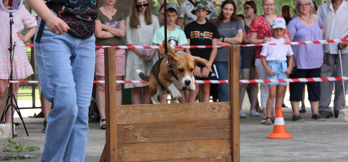 Как прошли соревнования по программе «Управляемая городская собака» в Барановичах. Фоторепортаж