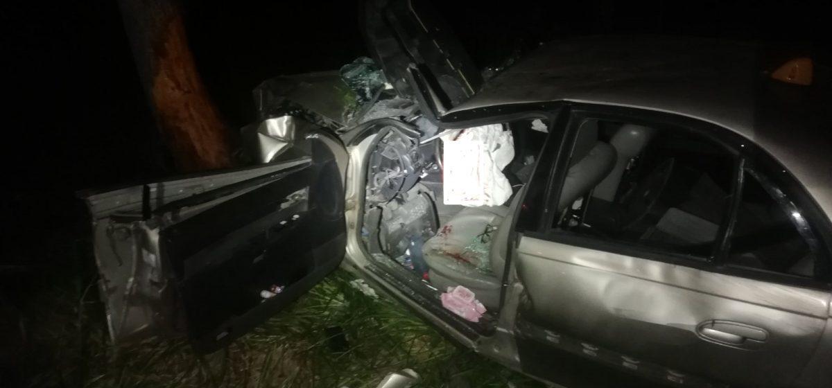 Opel сбил лося и влетел в дерево в Рогачевском районе – водителя заблокировало в машине