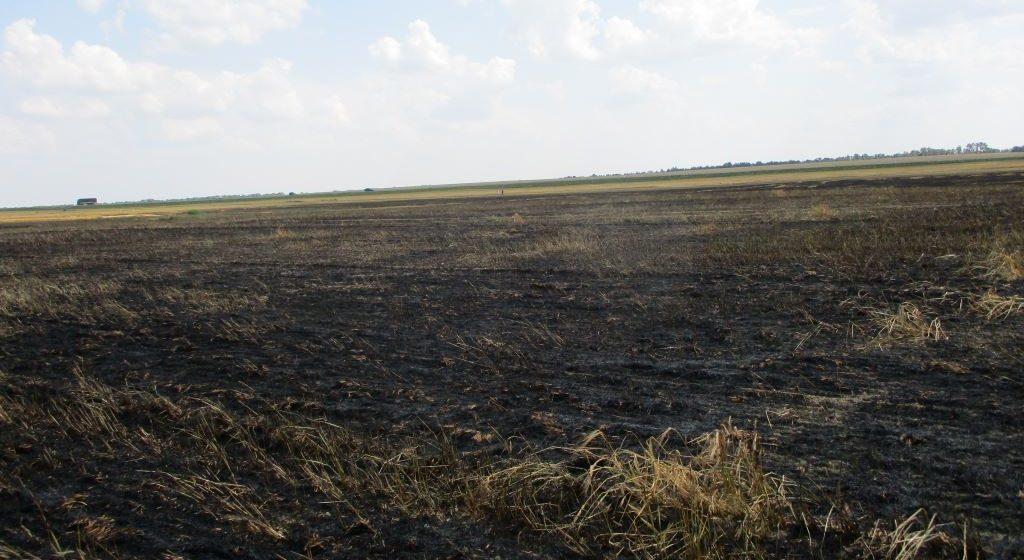 Ячменное поле горело под Барановичами. Видео