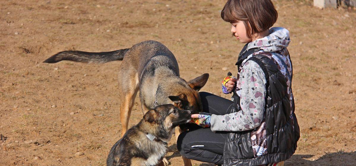 Необычное мероприятие для собак состоится в Барановичах