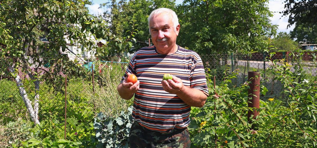 Правда ли, что сено спасет помидоры от фитофторы?