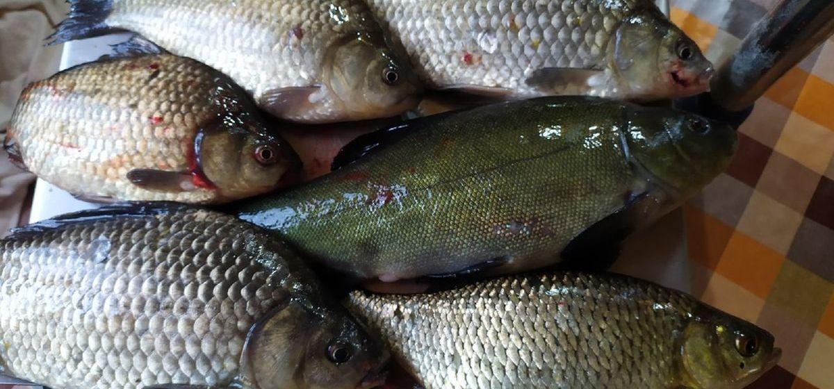 Рыба моя. Что выловили барановичские рыбаки за выходные 3 и 4 июля