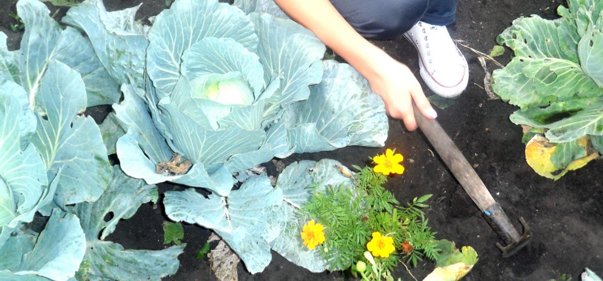 Календарь садово-огородных работ от Петра Ломоноса: 21-27 июля