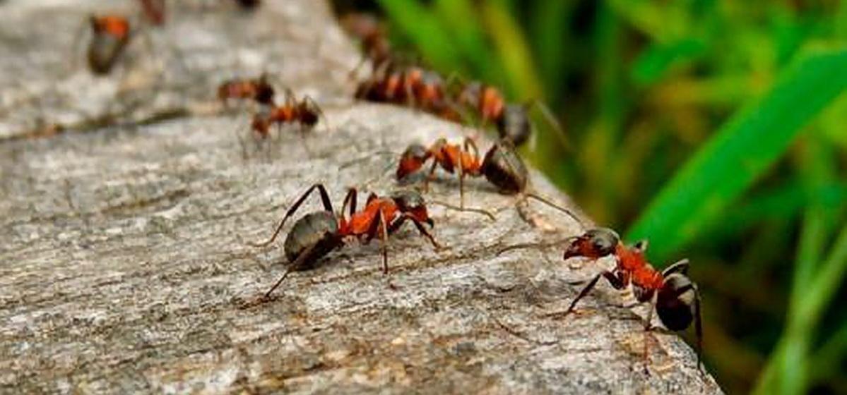 ТОП-7 советов как избавиться от муравьев на садовом участке