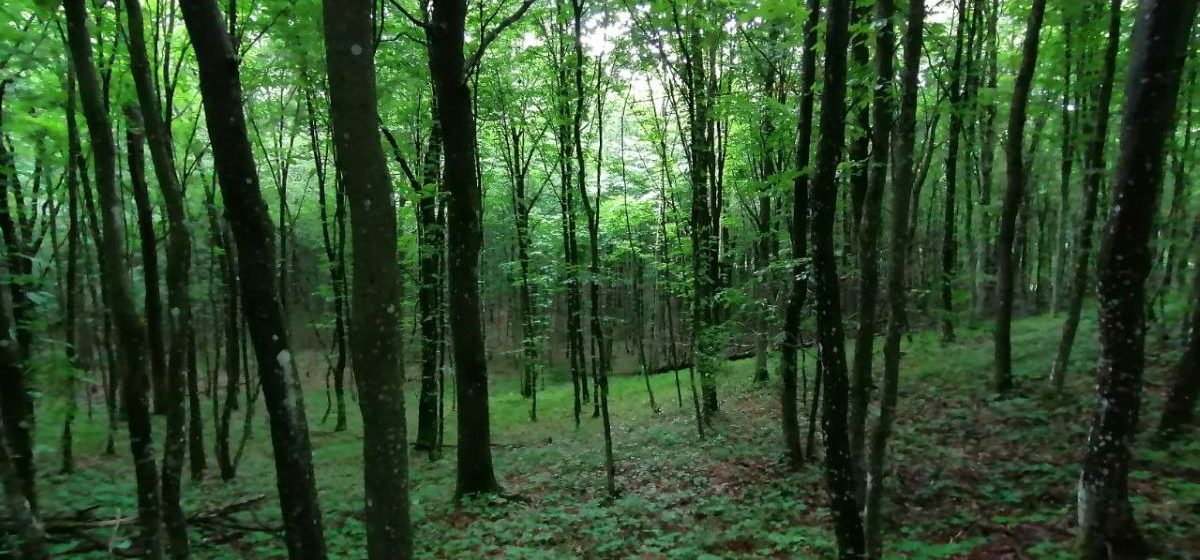 В 11 районах Брестской области ввели запрет на посещение лесов. Что происходит в Барановичском регионе?