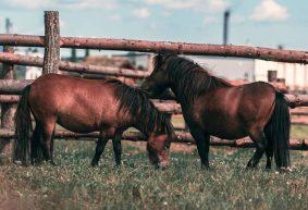 Парк животных «Диприз» все-таки откроется этим летом в Барановичах. Что нового ждет посетителей