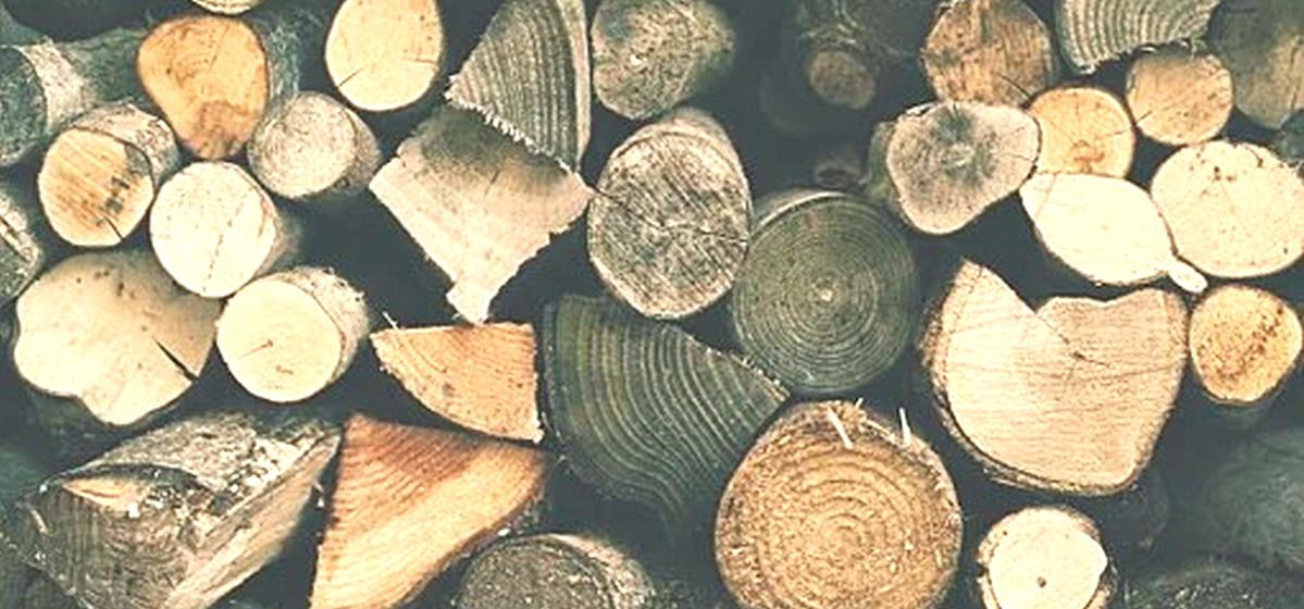 Интересные факты. Какие виды древесины являются самыми ценными и дорогими