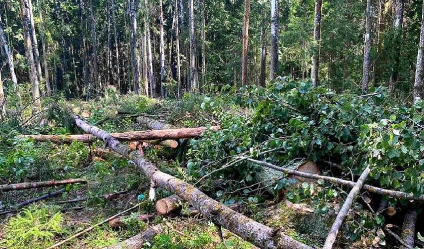 Мужчину придавило деревом в Березинском районе. Он умер в машине скорой помощи