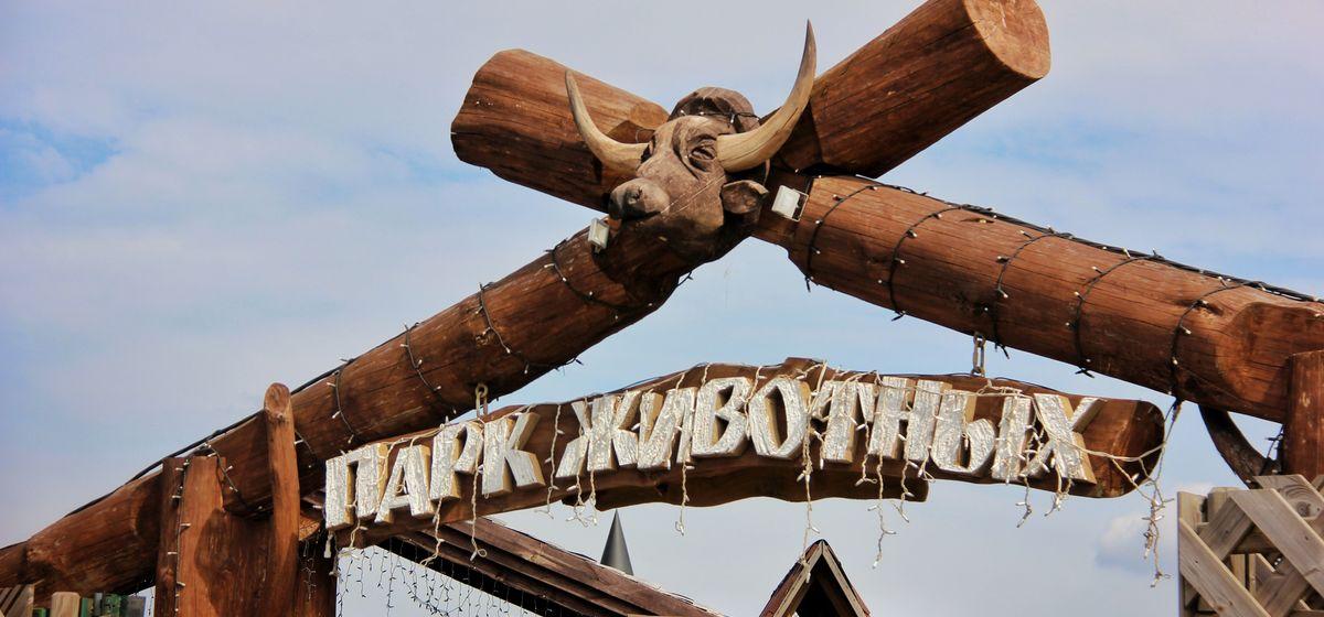Зубры, верблюды, страусы. Что происходит в зооландшафтном парке в Барановичах. Фоторепортаж