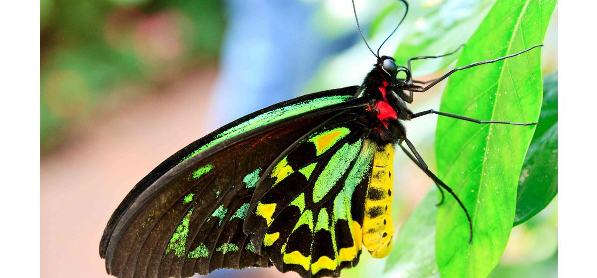 Интересные факты: Какие бабочки являются самыми большими в мире