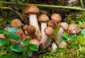 На каких грибах и ягодах еще можно заработать в Барановичах?