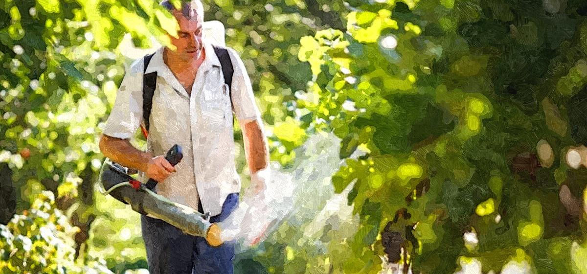 Какие важные процедуры нужно провести при уходе за виноградом