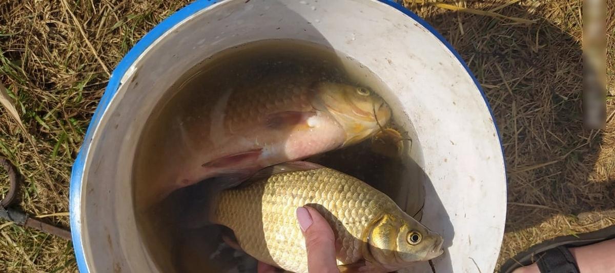 Рыба моя. Что выловили барановичские рыбаки за выходные 7 и 8 августа
