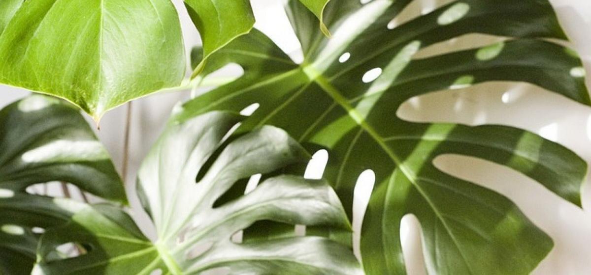 Будьте осторожны: 5 растений, которые опасно держать дома