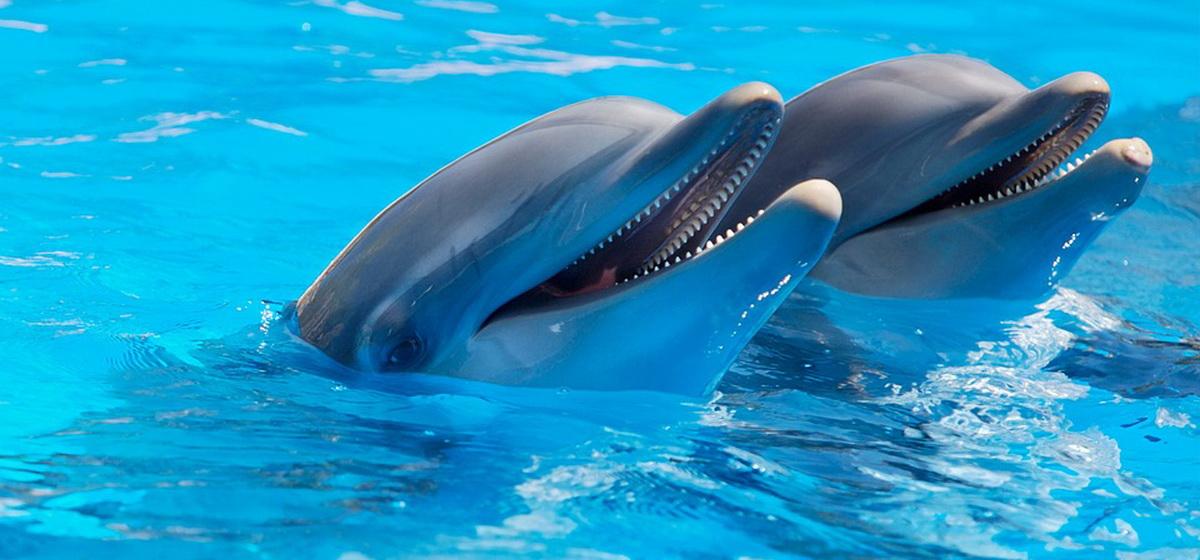 Интересные факты: 12 самых удивительных фактов о дельфинах