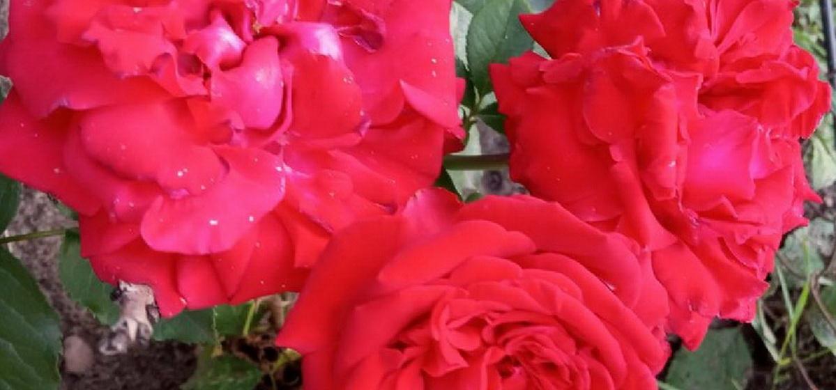 28 августа: какой сегодня праздник, что можно, а что нельзя делать в этот день
