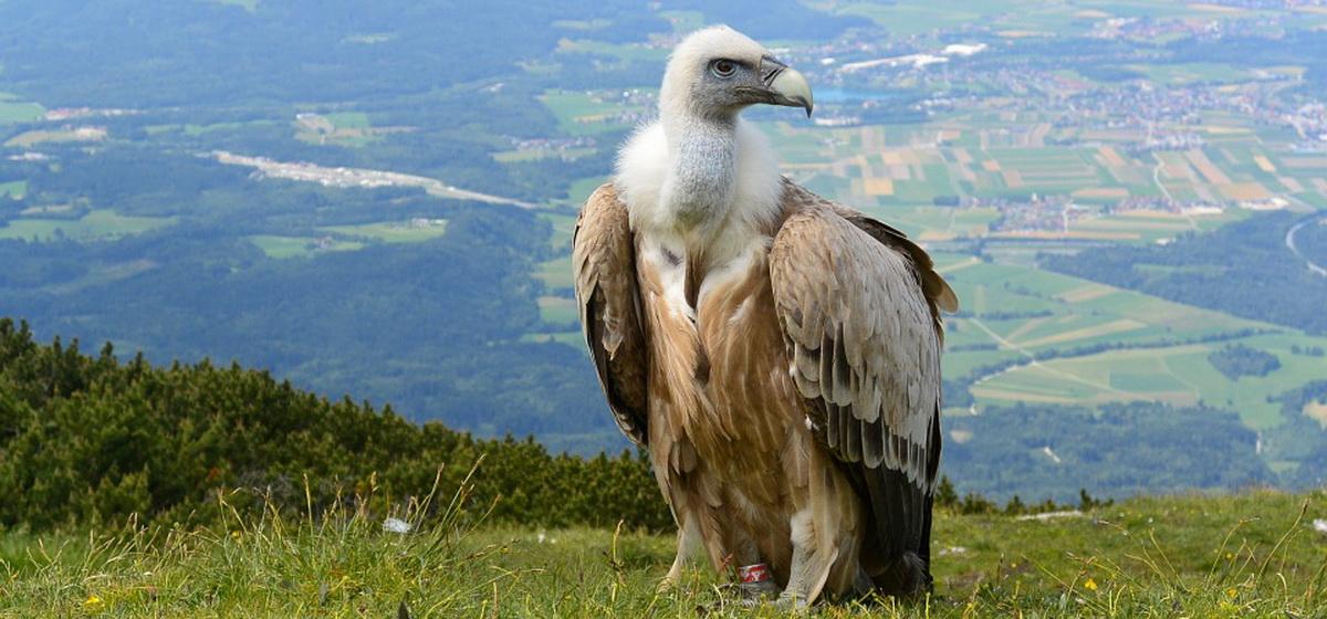 Интересные факты: Какие птицы живут дольше всех, вы будете удивлены