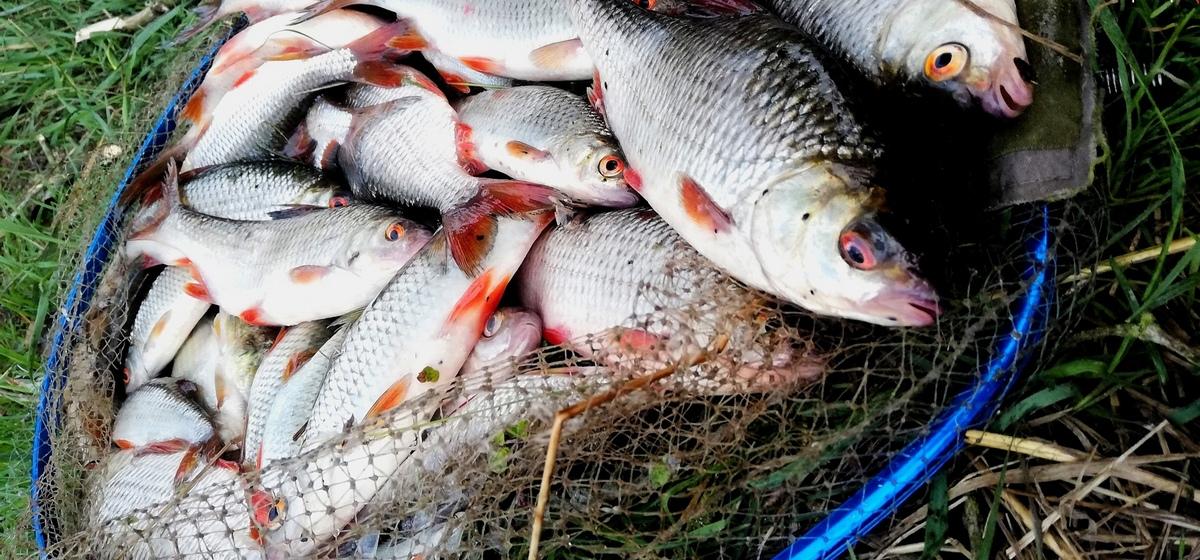 Рыба моя. Что выловили барановичские рыбаки за выходные 28 и 29 августа