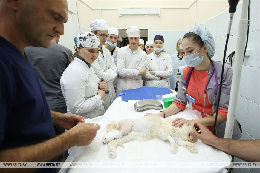 Протез, распечатанный на 3D-принтере, установили кошке из Барановичей