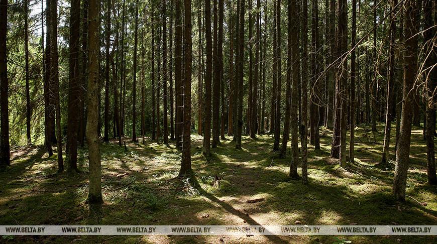 За сутки в Беларуси найдены 16 заблудившихся в лесах