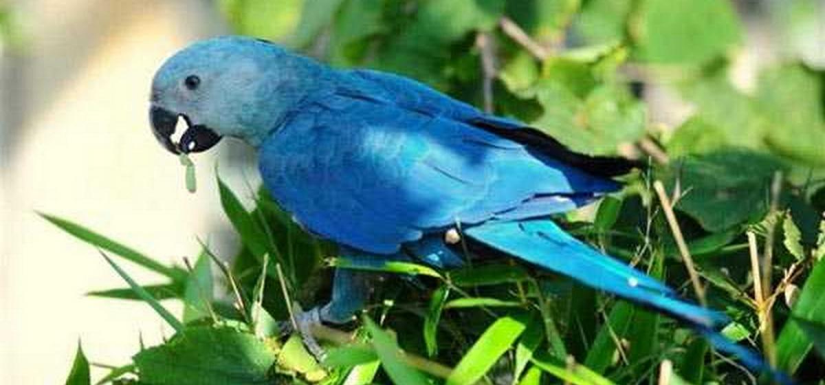Интересные факты. Какие виды попугаев являются самыми дорогими и почему
