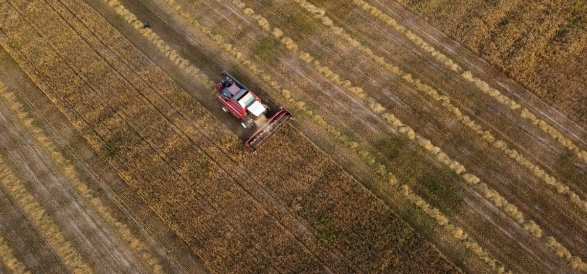 Урожайность зерна в Беларуси в 1,5 раза меньше, чем в Литве. Инфографика