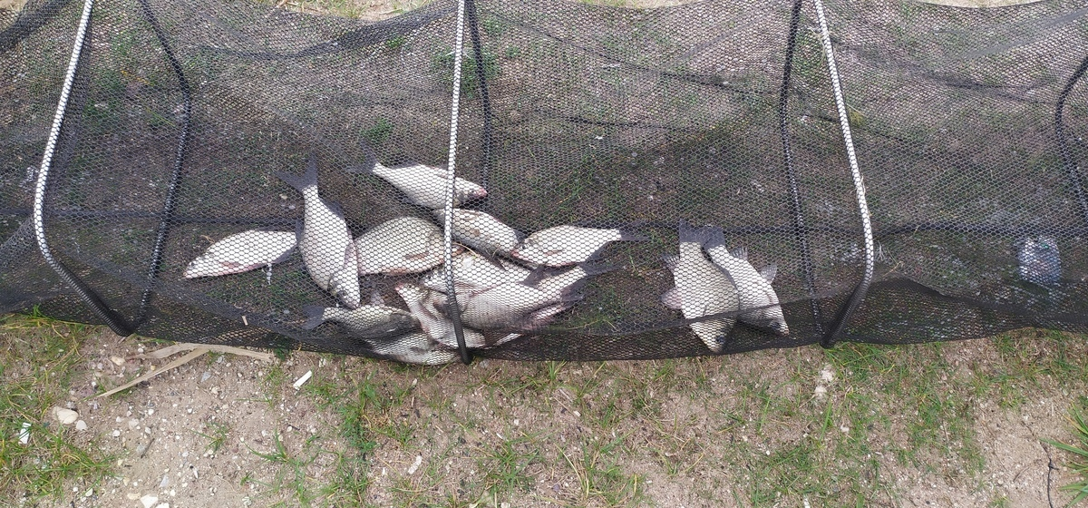 Рыба моя. Что выловили барановичские рыбаки за выходные 4 и 5 сентября