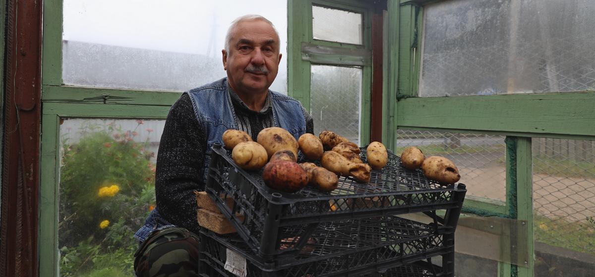 Диагноз по клубням: какой картофель ни в коем случае нельзя оставлять на семена