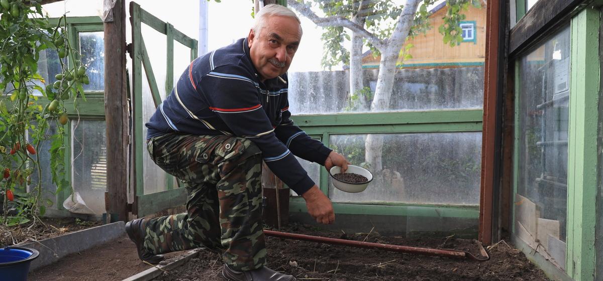 Почему нельзя перекапывать землю после томатов в теплице и как оздоровить почву с помощью сидератов