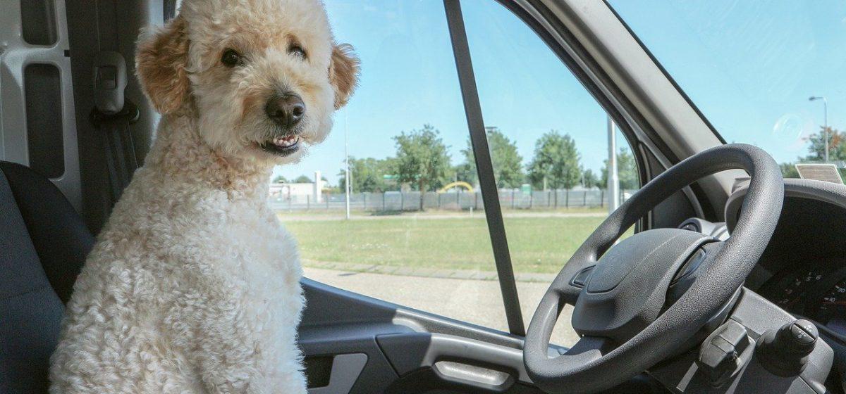 Водителей призывают отказаться от поездок на автомобиле 22 сентября