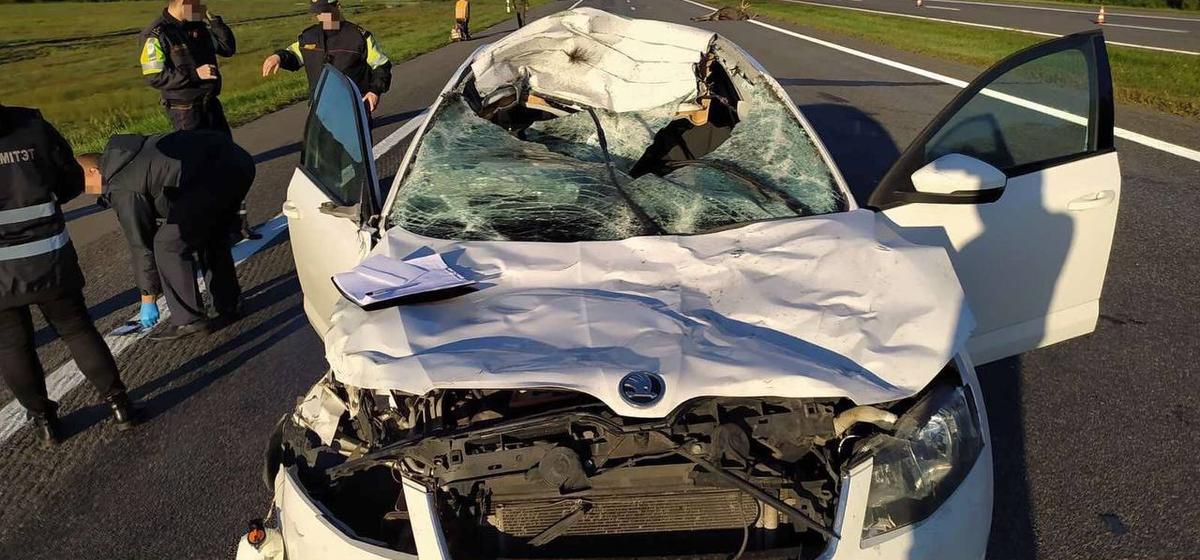 Автомобиль «Шкода» сбил лося на трассе Брест – Минск – граница РФ, погиб водитель