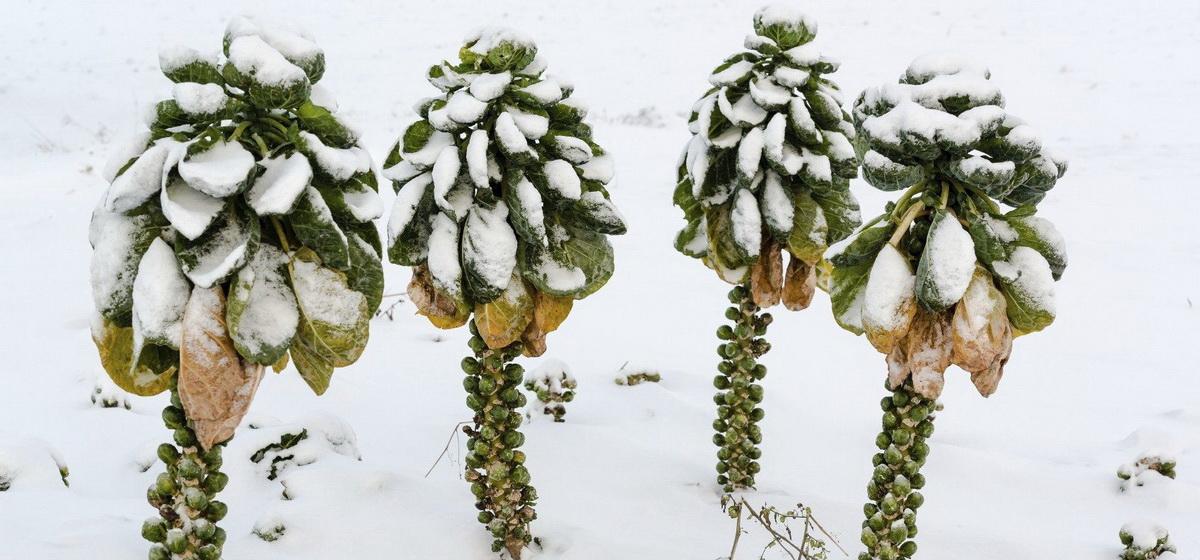 Не спешите убирать эти 5 овощей, которым осенние холода на пользу