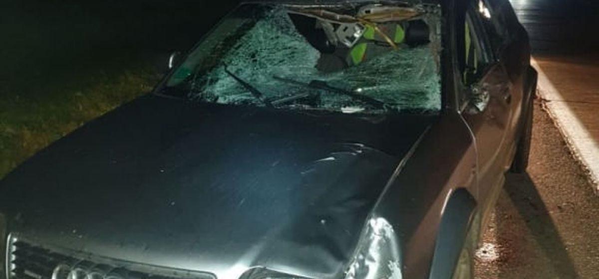 Автомобиль Audi сбил лося на трассе Минск — Витебск, пострадали два человека, в том числе ребенок