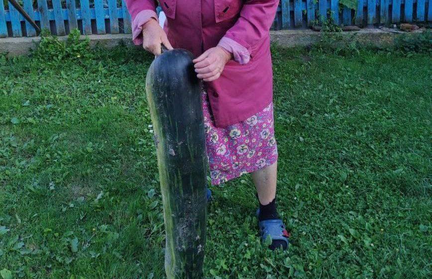 Посмотрите, какой гигантский кабачок вырос в огороде у жителей Барановичей