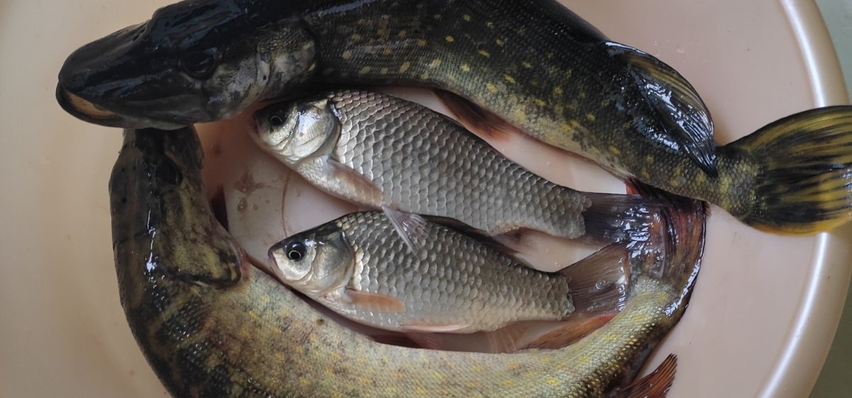 Рыба моя. Что выловили барановичские рыбаки за выходные 18 и 19 сентября