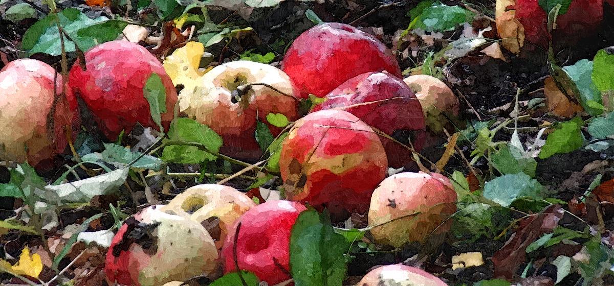 Куда девать опавшие яблони и груши: простые решения