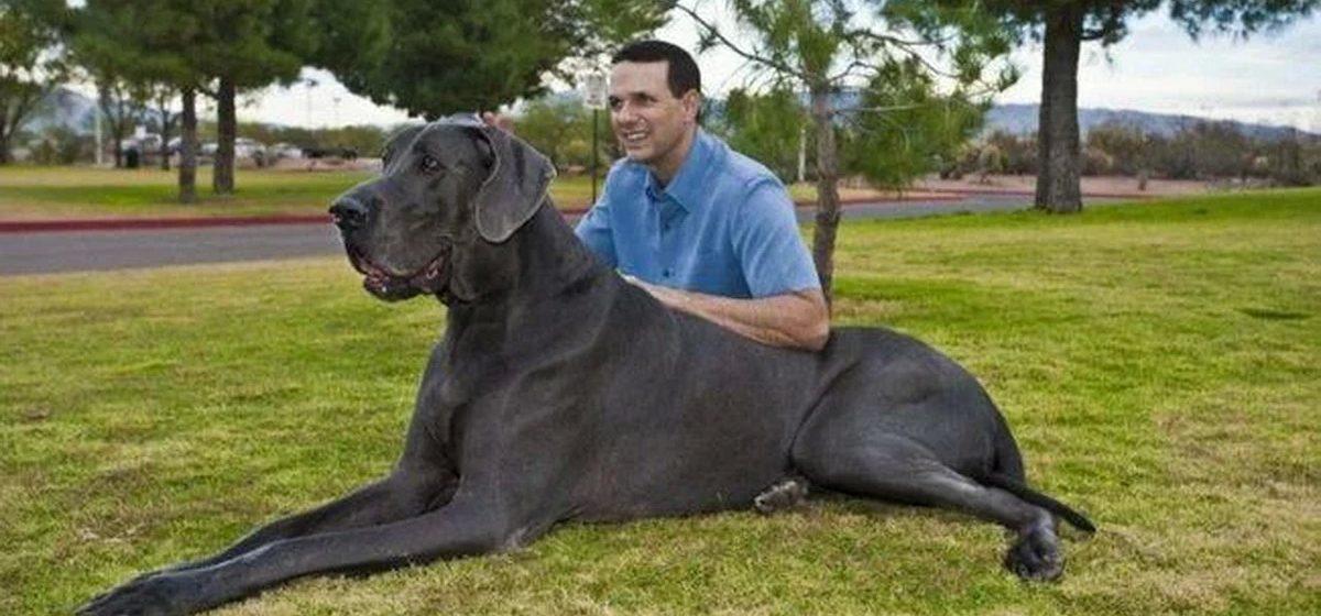 Интересные факты. Самые известные собаки из Книги рекордов Гиннесса